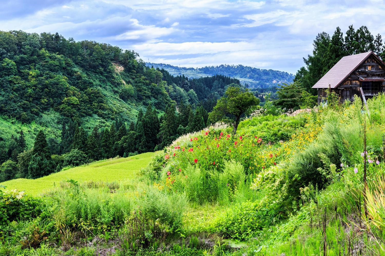 緑の綺麗な田舎の集落