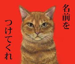 名前をつけて欲しそうにこちらを見てる猫