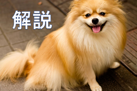 犬が解説をするアイキャッチ画像